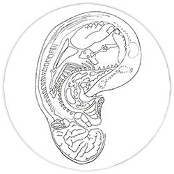 somatotopia auricolare paul nogier